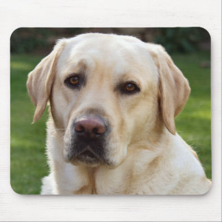 Yellow Labrador Retriever Puppy Dog - Green Mouse Pad