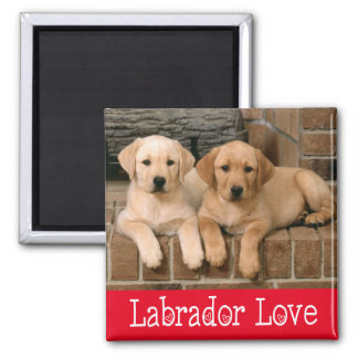 Yellow Labrador Retriever Puppy Dog - Yellow Lab Square Magnet
