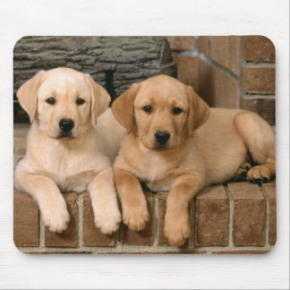 Yellow Labrador Retriever Puppy Dogs Mouse Pad