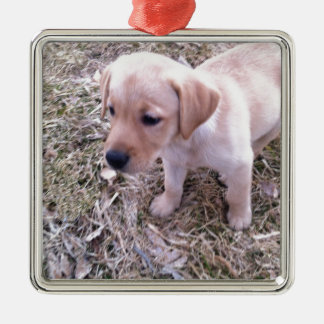 Yellow Labrador Retriever Silver-Colored Square Decoration