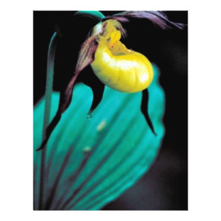 Yellow lady's slipper personalized flyer