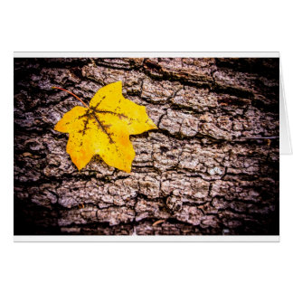Yellow leaf against bark card