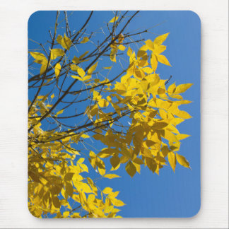 Yellow Leaves on Fall Tree v2 Mouse Pad