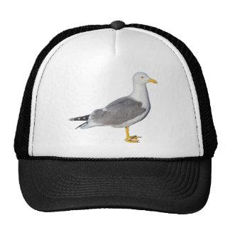 Yellow Legged Gull Cap