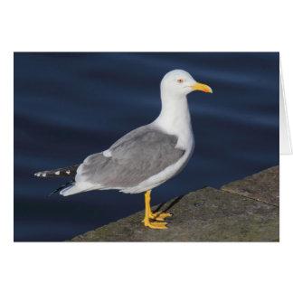Yellow-Legged Gull Greeting Card