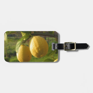 Yellow lemons growing on the tree at sunset luggage tag
