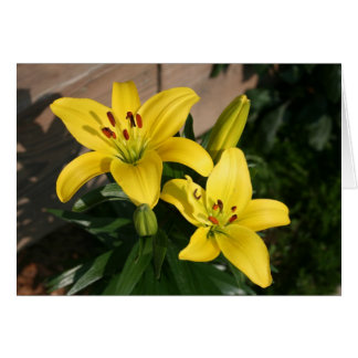 Yellow Lillies Card
