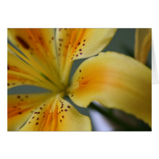 Yellow Lilly Card