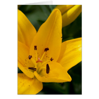 Yellow Lily Blank 5x7 Greeting Card