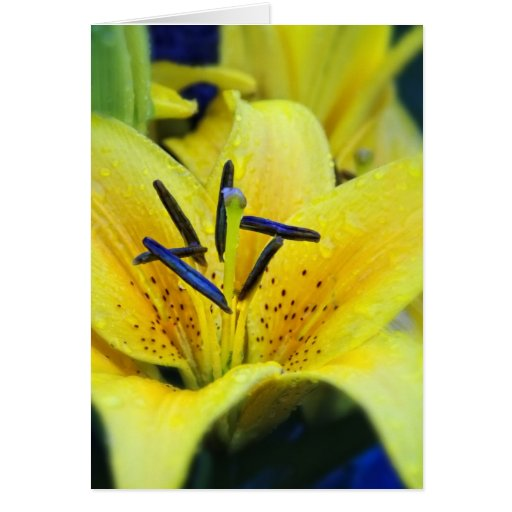 Yellow Lily-Blank Card