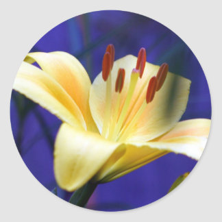 Yellow Lily Classic Round Sticker
