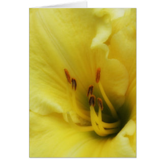 Yellow Lily Close Up Blank Card