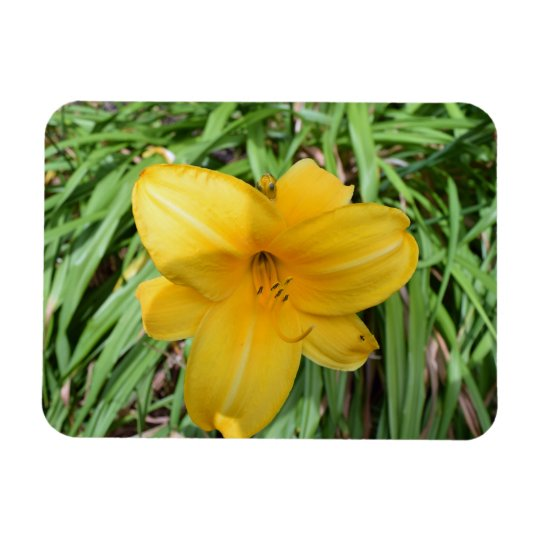 Yellow lily up close fridge magnet