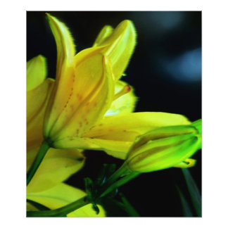 Yellow Lily With Wind Effect Photographic Print