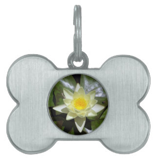 Yellow Lotus and lily pads Pet ID Tags