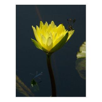 Yellow Lotus Waterlily Postcard