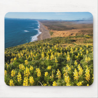 Yellow Lupine Above Point Reyes Beach At Point Mouse Pad
