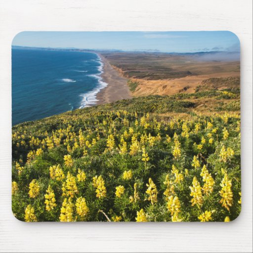 Yellow Lupine Above Point Reyes Beach At Point Mousepads