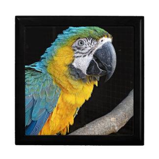 Yellow-macaw Gift Box