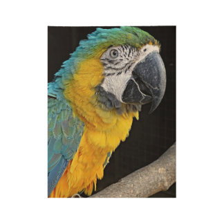Yellow-macaw Wood Poster