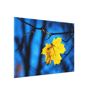Yellow Maple Leaf On Blue Canvas Print