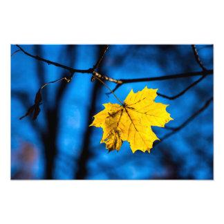 Yellow Maple Leaf On Blue Photo Print