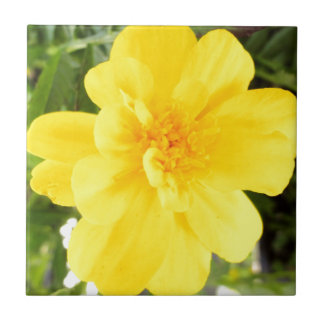 Yellow Marigold Flower Close Up Summer Flowers Small Square Tile