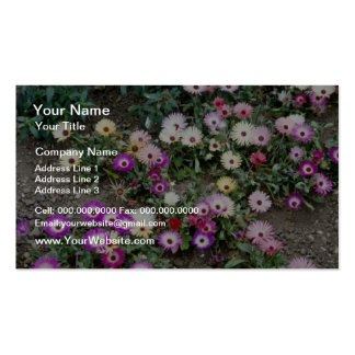 Yellow Mesembryanthemum (Ice plant) flowers Business Card Templates