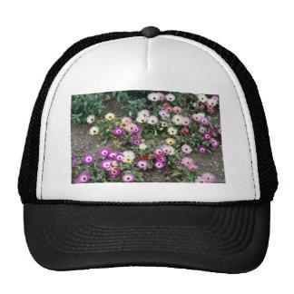 Yellow Mesembryanthemum (Ice plant) flowers Trucker Hat