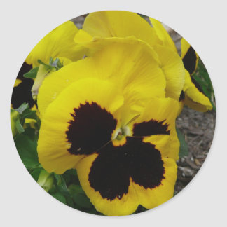 Yellow Mixed Pansy Classic Round Sticker