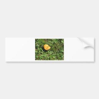 Yellow mushroom on a green meadow bumper sticker
