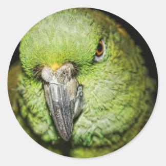 Yellow-Naped Amazon Parrot Stickers