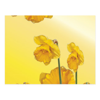 Yellow Narcissus Daffodil Retro Vintage Postcard