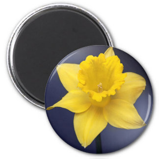 Yellow Narcissus Flower Floral watercolor paint 6 Cm Round Magnet