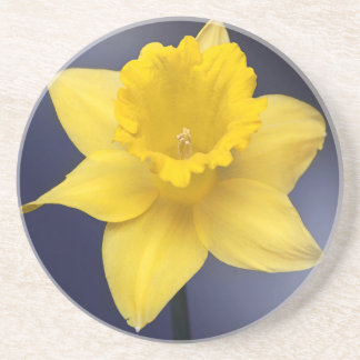 Yellow Narcissus Flower Floral watercolor paint Coasters