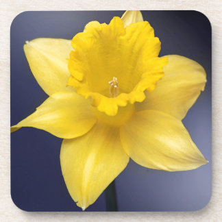 Yellow Narcissus Flower Floral watercolor paint Drink Coasters