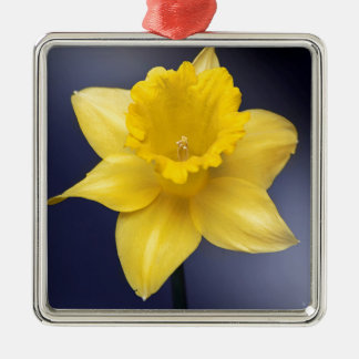 Yellow Narcissus Flower Floral watercolor paint Silver-Colored Square Decoration