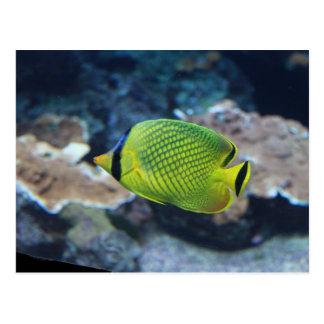 Yellow Neon Fish Postcard