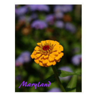 Yellow on violet postcard