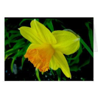 Yellow Orange Daffodil Note Card