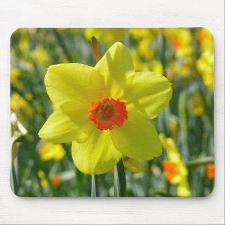 Yellow orange Daffodils 01.0 Mouse Pad