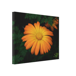 Yellow orange daisy flower canvas print