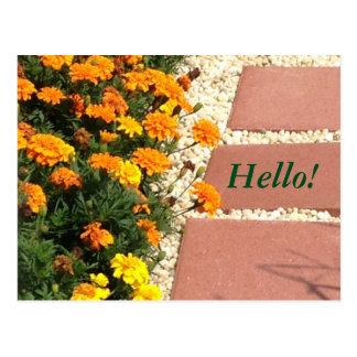 Yellow Orange Marigold Flowers Postcards