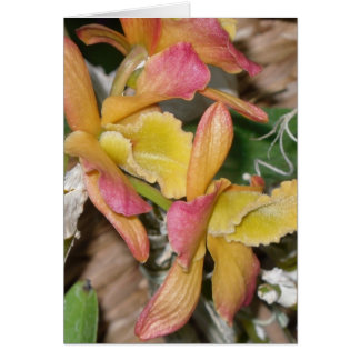 yellow orchid blank greeting card