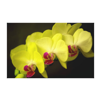 Yellow Orchid - Canvas Canvas Print