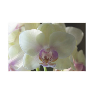Yellow Orchid Canvas Canvas Print