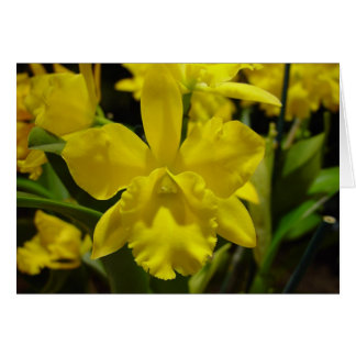 Yellow orchid card