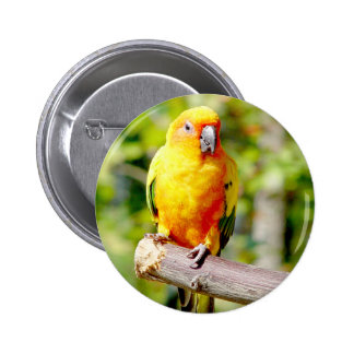 Yellow Parrot Button
