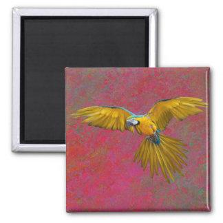 Yellow parrot in flight magnet