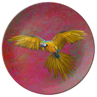 Yellow parrot in flight plate